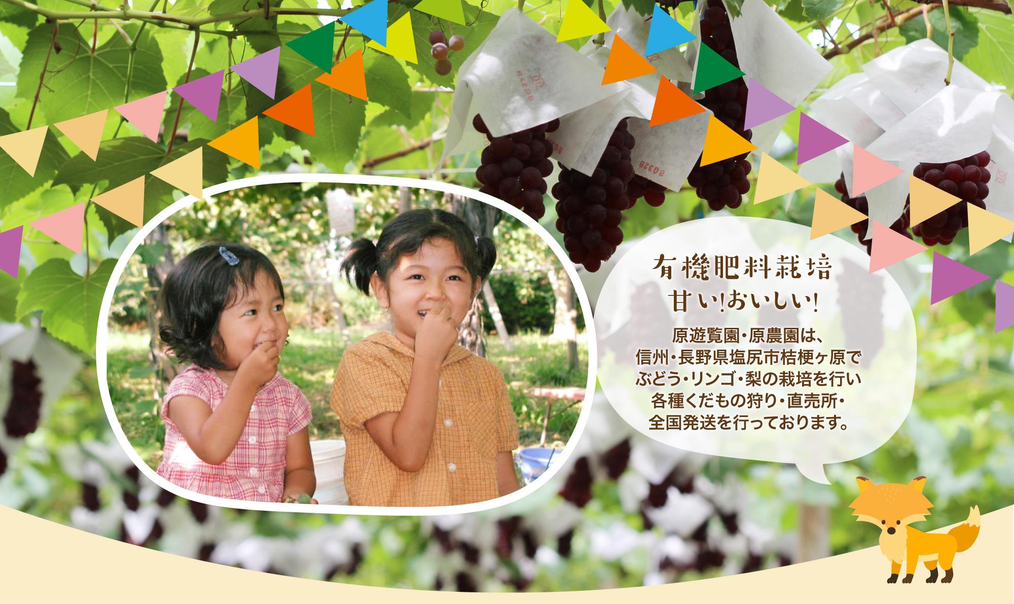 原遊覧園・原農園は、信州・長野県塩尻市桔梗ヶ原でぶどう・リンゴ・梨の栽培を行い各種くだもの狩り 直売所 全国発送を行っております。